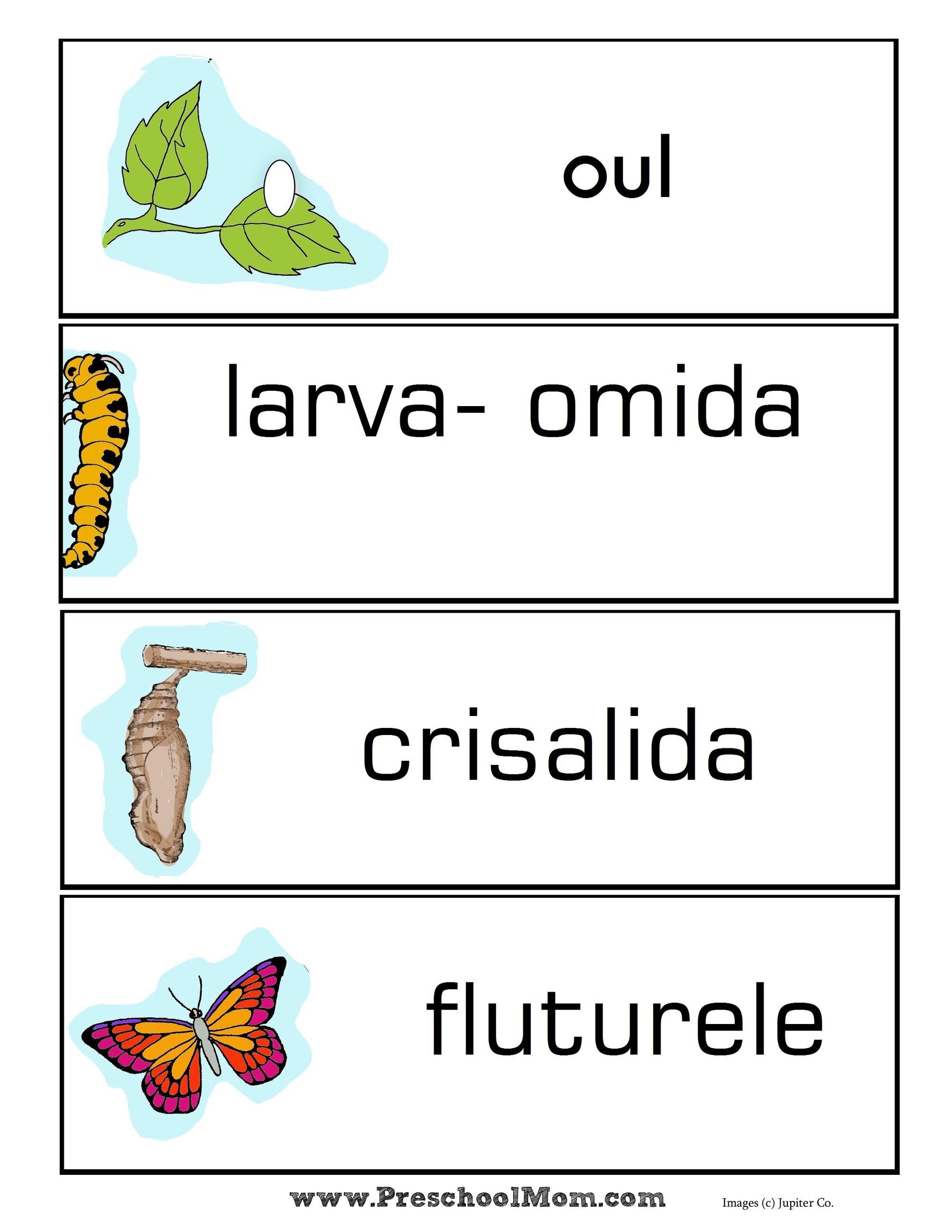 Planificare Stiinte Ale Naturii-1 Ciclul de viață al fluturilor și lanțurilor